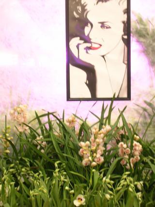 http://fleursdepeaux.cowblog.fr/images/orchidees014.jpg