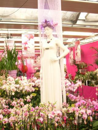 http://fleursdepeaux.cowblog.fr/images/orchidees016.jpg