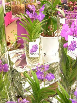 http://fleursdepeaux.cowblog.fr/images/orchidees021.jpg